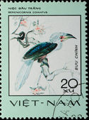 VIETNAM - CIRCA 1982: stamp - animal bird hornbill — Stock Photo
