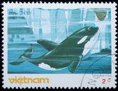 VIETNAM - CIRCA 19805 : stamp - animal whale — Foto de Stock