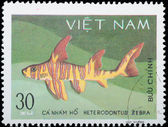 VIETNAM - CIRCA 1980: stamp animal fish shark — Stok fotoğraf