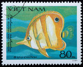 VIETNAM - CIRCA 1984: stamp animal fish — Stok fotoğraf