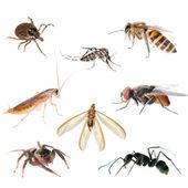 Zwierząt owadów błędów — Zdjęcie stockowe