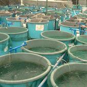Rolnictwo gospodarstw akwakultury — Zdjęcie stockowe