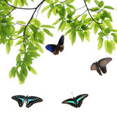 Mariposa volando — Foto de Stock