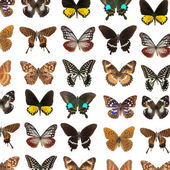 Lepidoptera vlinder — Stockfoto