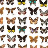 Motyl motyle — Zdjęcie stockowe