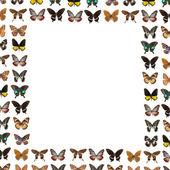 Butterfly frame background — Stock Photo