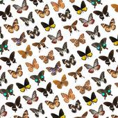Lepidópteros mariposa — Foto de Stock