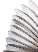 Bird wing feather — Stock Photo