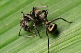 Ant on green leaf — Stock Photo