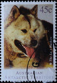 AUSTRALIA stamp shows Siberian husky dog — Stok fotoğraf