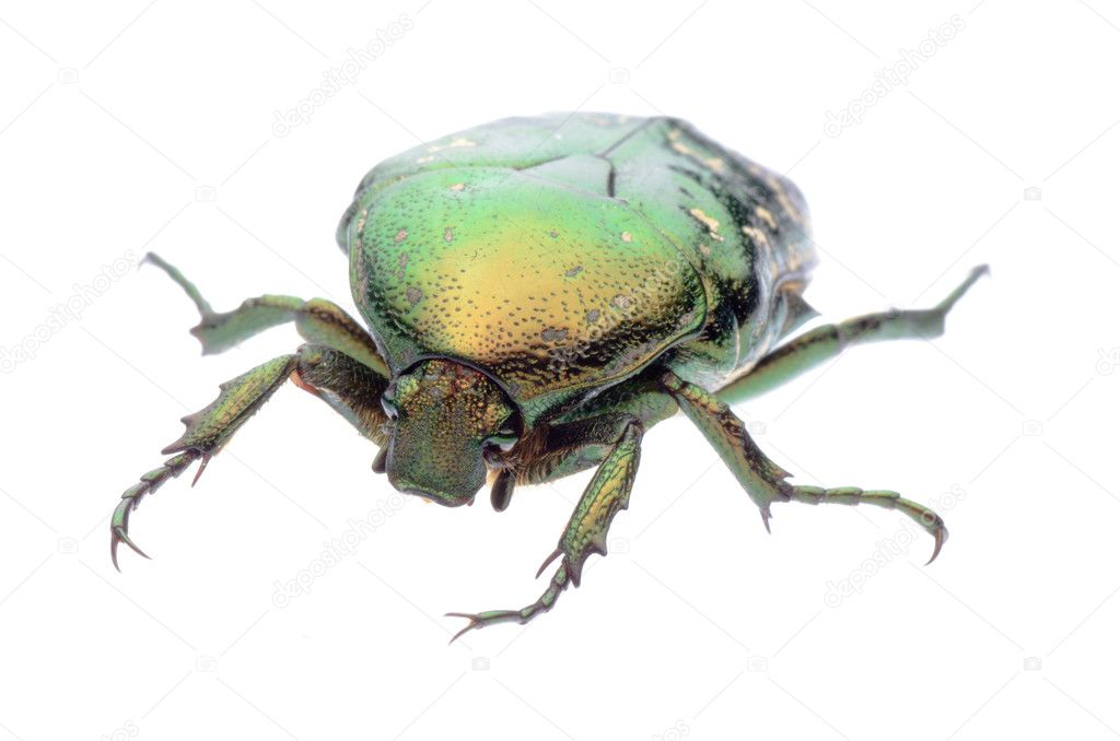 Green beetle isolated on white background — Stock Photo #6928316