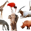 Wild animal collection — Stock Photo