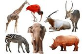 Wild animal collection — Stock Photo