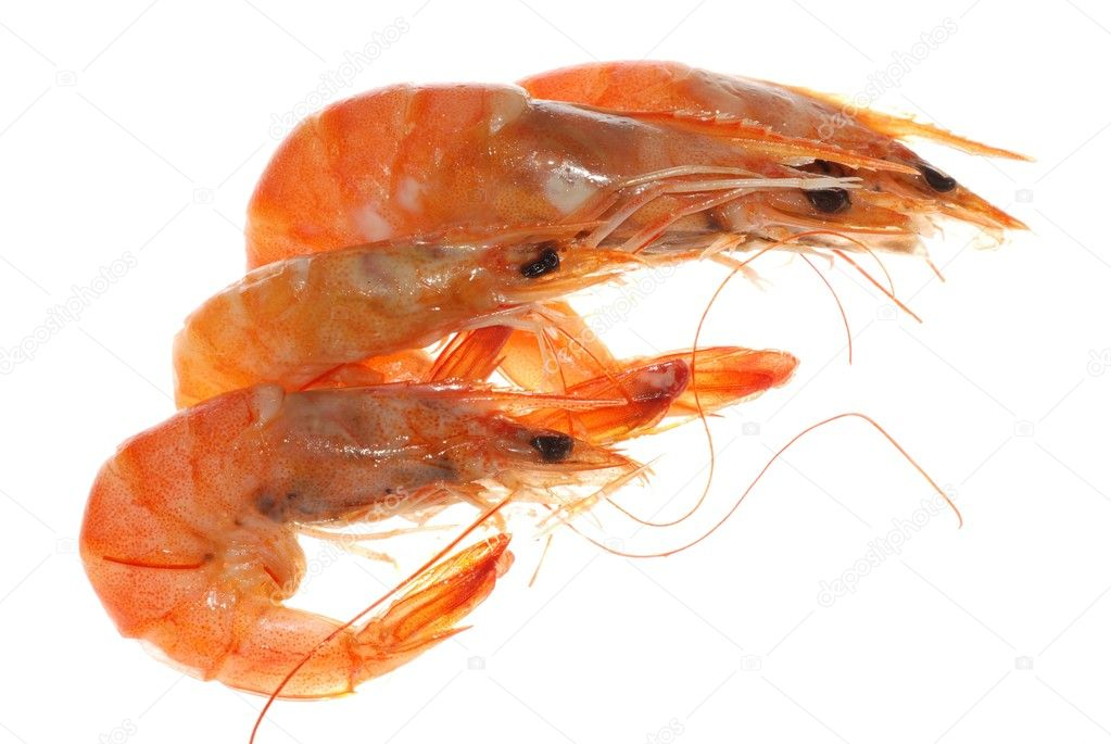 Delicious boiled shrimp isolated in white — Stock Photo #6951688