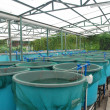Agriculture aquaculture farm — Stock Photo #7002385