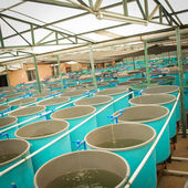 Agriculture aquaculture farm — Photo
