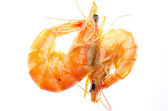 Boiled red shrimp — Stock Photo