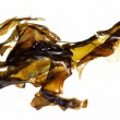 Seaweed kelp — Stock Photo