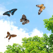 Flying butterfly - Stock Photo