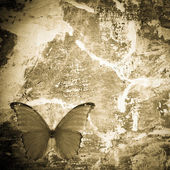 Butterfly grunge wall textured backgriund — Stock Photo