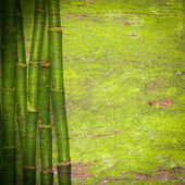 Bamboo green background — Stock Photo
