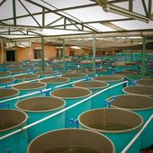 Agriculture aquaculture farm — Foto Stock