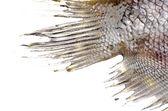 Fish tail fin — Stock Photo