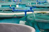 Agriculture aquaculture water system farm — Stock Photo