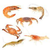 Seafood animal — Stock Photo