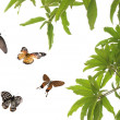 Stock Photo: Flying butterfly