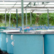 Stock Photo: Agriculture aquaculture water system farm