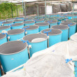 Foto Stock: Winter aquaculture hothouse