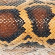 Bosnake pattern — Stock Photo #7296670