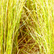 Stock Photo: Background grass