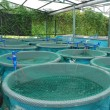 Agriculture aquaculture farm — Stock Photo #7297415