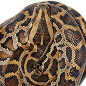 Wąż Boa — Zdjęcie stockowe