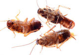 Dead insect cockroach bug — Stock Photo