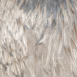 Ostrich bird feather grey — Foto Stock
