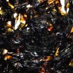 Seaweed kelp — Stock Photo