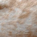 Animal elk deer fur — Stock Photo