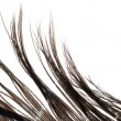 Royalty-Free Stock Photo: Feather abstract texture