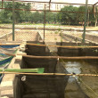 Stock Photo: Agriculture aquaculture farm