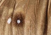 Orman perisi kelebek kanat uygu — Stok fotoğraf
