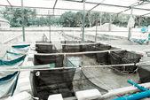 Agriculture aquaculture farm — Stock Photo