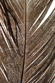 Feather abstract texture — Stock Photo