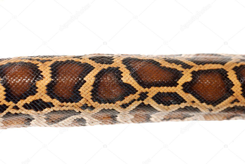 蟒蛇蛇皮肤上白色隔离– 图库图片