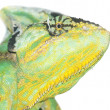 Chameleon head - Stock Photo
