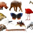 Animals - Stock Photo