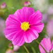 Single pink flower - Stock Photo