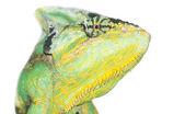 Chameleon head — Fotografia Stock